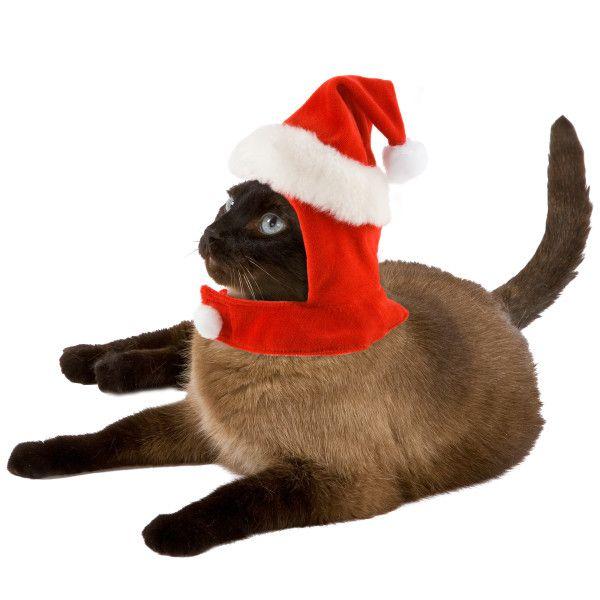पालतू जानवरों के लिए विशेष रूप से बिल्ली के मेयो पाठकों के लिए प्रतियोगिता प्रदान करते हैं