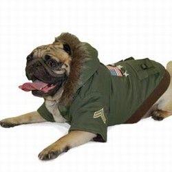 कुत्ते जैकेट पहने हुए पग