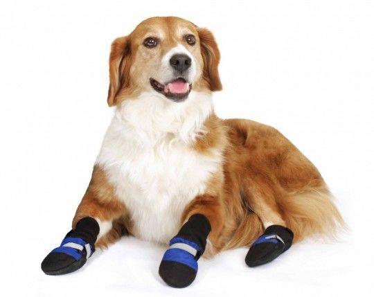 कुत्ते जूते पहनने कुत्ते