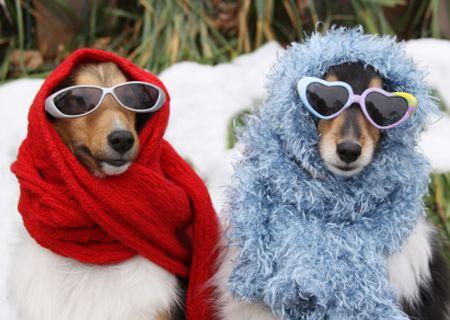 स्टाइलिश शीतकालीन कुत्तों