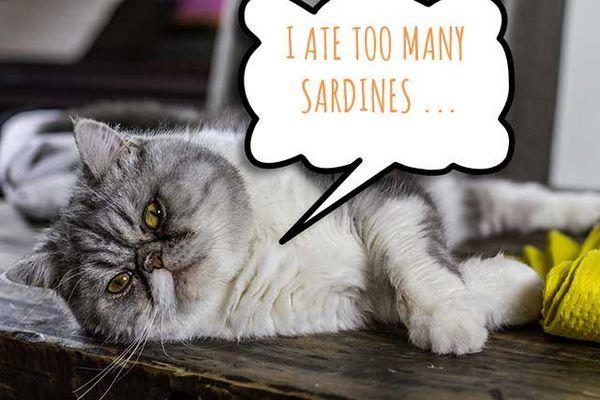 एक विचार बुलबुले के साथ बिल्ली जो कहती है कि मैंने बहुत सारे सार्डिन खाए हैं