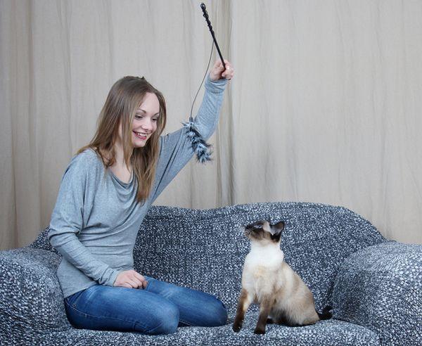 आपकी बिल्ली आक्रामक अभिनय कर सकती है 5 कारण