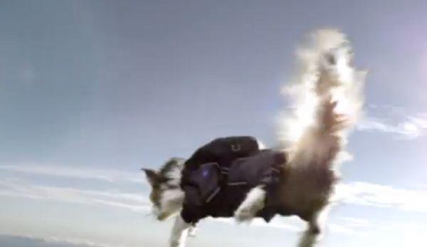 स्वीडिश स्काइडाइविंग बिल्लियों विज्ञापन आक्रोश और lols sparks