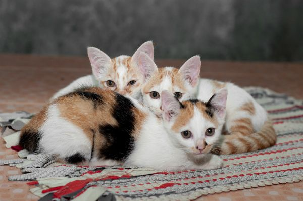 2012 के 10 सबसे आधुनिक बिल्ली नाम