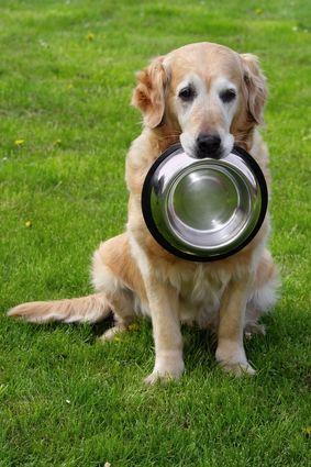 एलर्जी के लिए 5 सबसे अच्छा कुत्ता खाद्य पदार्थ
