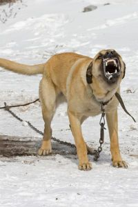 कुत्ता आक्रमण