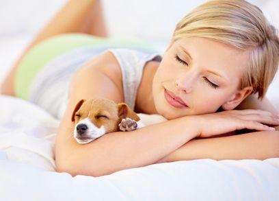 अपने कुत्ते साथी के लिए सबसे अच्छा कुत्ता बिस्तर
