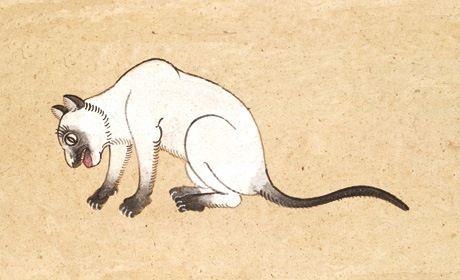 सियामी बिल्ली नस्ल: सूचना और तथ्यों