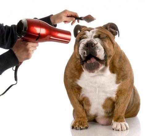 अपने कुत्ते को तैयार करना