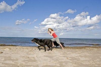 अपने कुत्ते को रोजाना व्यायाम करने के लिए शीर्ष 10 कारण