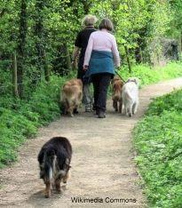 ट्रेल पर कुत्तों का उपयोग करने वाली महिलाएं