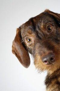 कुत्तों में अलगाव की चिंता को रोकने के लिए शीर्ष 10 तरीके