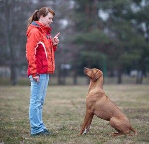कुत्तों में अलगाव चिंता को खत्म करने के लिए प्रशिक्षण युक्तियाँ
