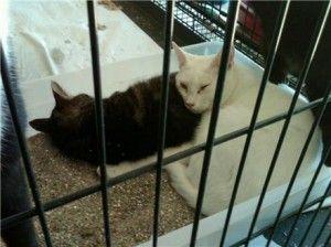अद्यतन: दक्षिण कैरोलिना बचाव से जब्त बिल्लियों