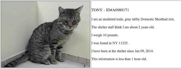 अद्यतन: ब्रुकलीन सूटकेस बिल्ली टोनी ल्यूकेमिया के लिए सकारात्मक परीक्षण करती है