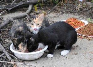 `हरा` कृंतक नियंत्रण चाहते हैं? फारल बिल्लियों सोचो