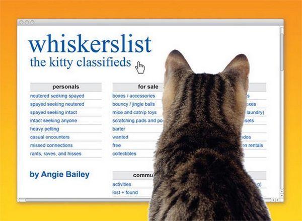 हम बिल्ली बिल्ली लेखक एली बेली से उसकी बिल्ली हास्य पुस्तक