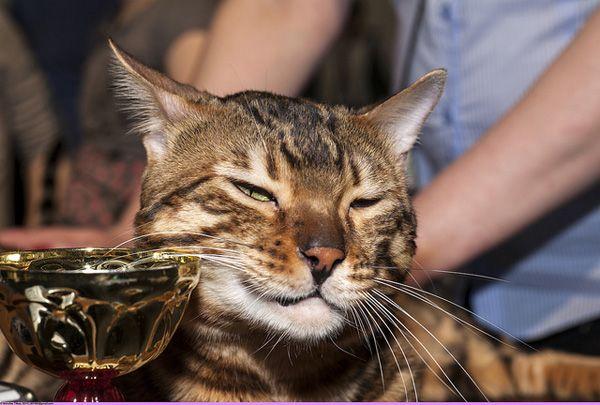क्या होगा अगर बिल्लियों राजनेता थे? ये उनके स्मीयर विज्ञापन होंगे