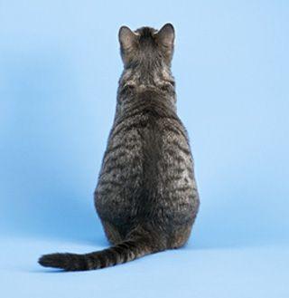 आपके बिल्ली फर्नीचर आपके बारे में क्या कहता है