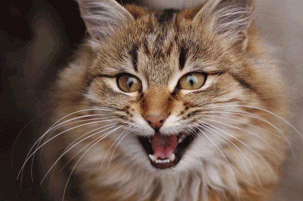 सुपर कटोरे विज्ञापनों में बिल्लियों कहाँ थे?