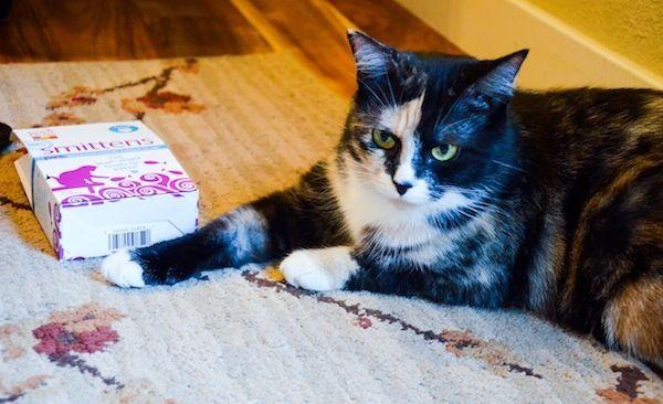 ईमानदार रसोई से अपनी बिल्ली के लिए एक पुरस्कार पैक जीतें