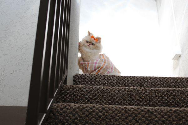 तुम लोग, हम अपने पुराने घर में वापस चले गए! और ओमग मेरे अगले दरवाजे पड़ोसी कितना गर्म है?